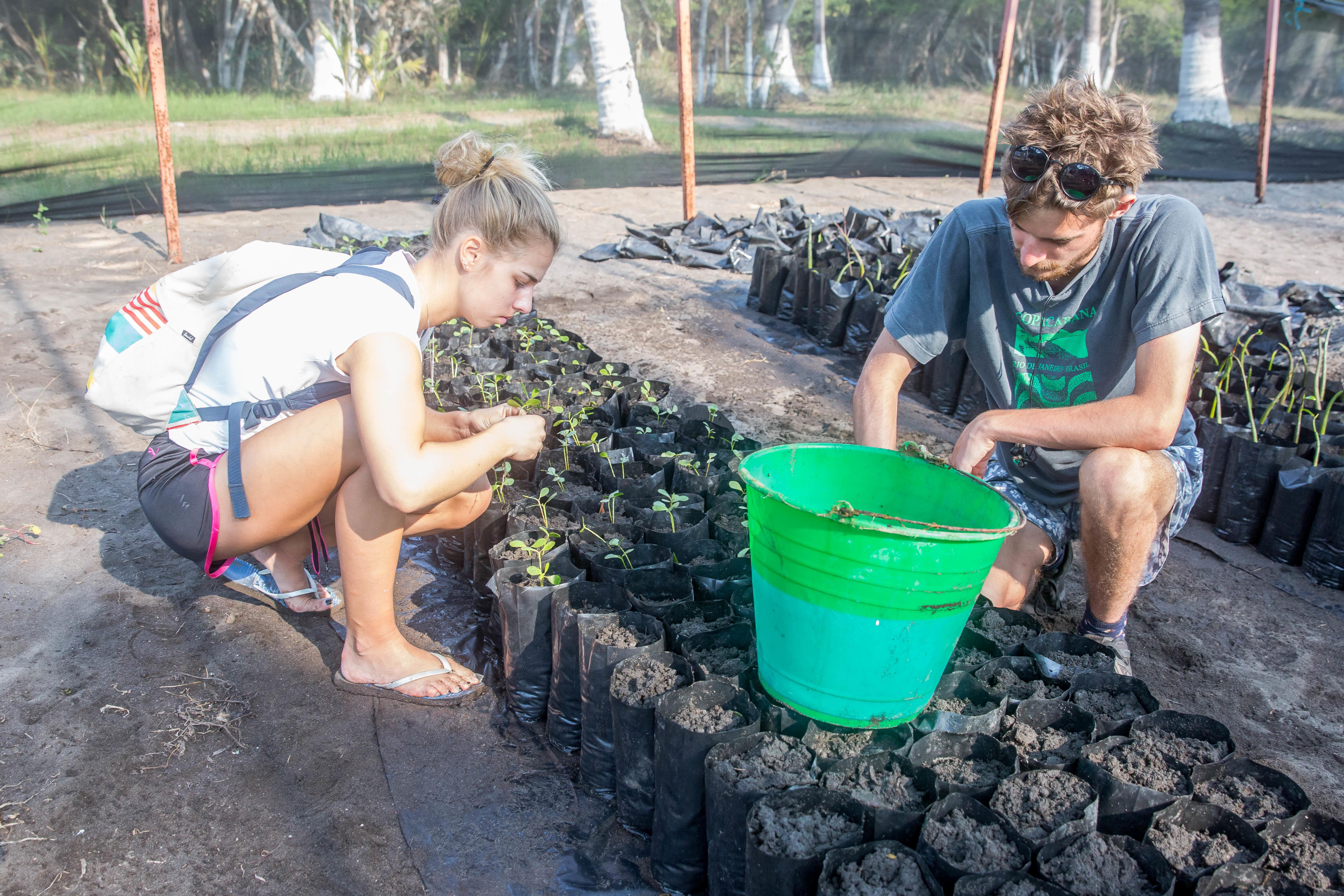 Two students plant mangroves for their conservation volunteering in Mexico.